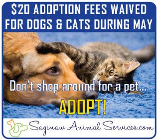 FREE-Adoptions-DogsCats-050219