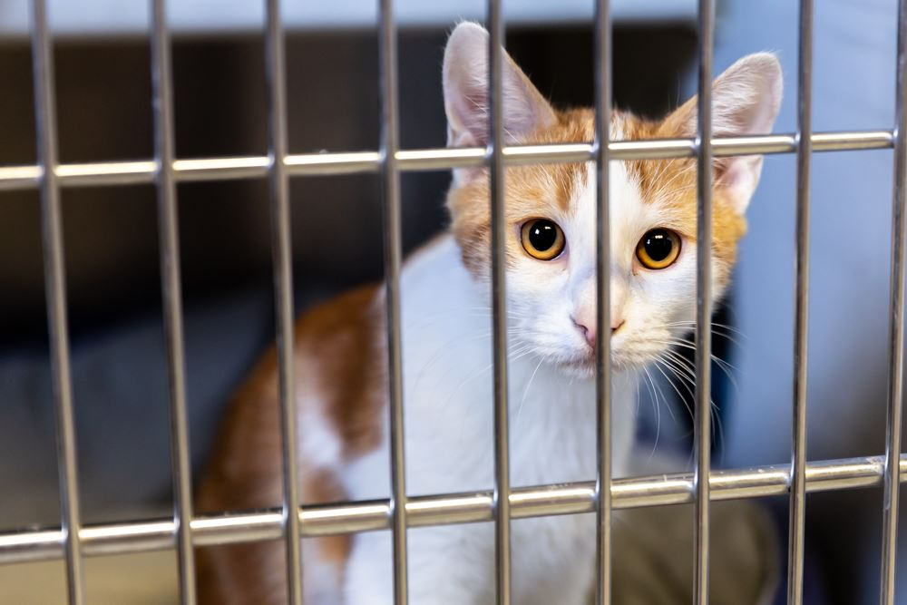 Saginaw Clear the shelter Aug17 2019_CL_6997-Web
