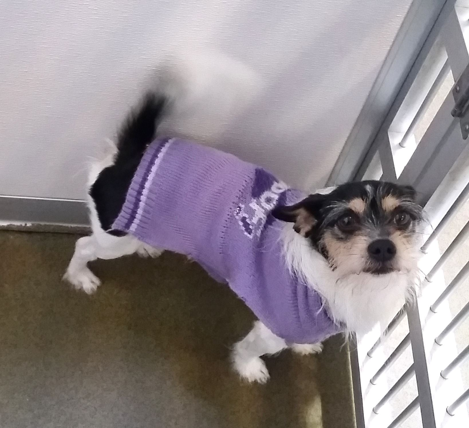 Tucker Sweater