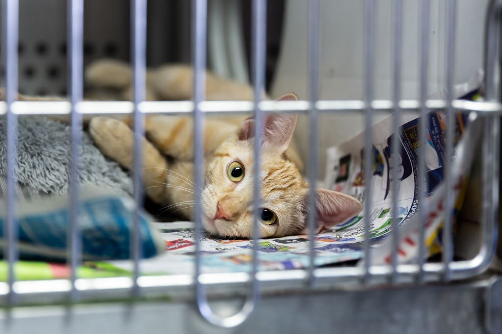 Saginaw Clear the shelter Aug17 2019_CL_6982-Web